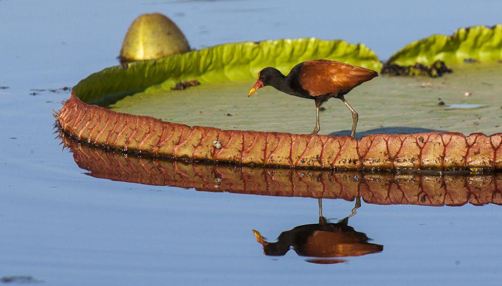 visitar o Pantanal