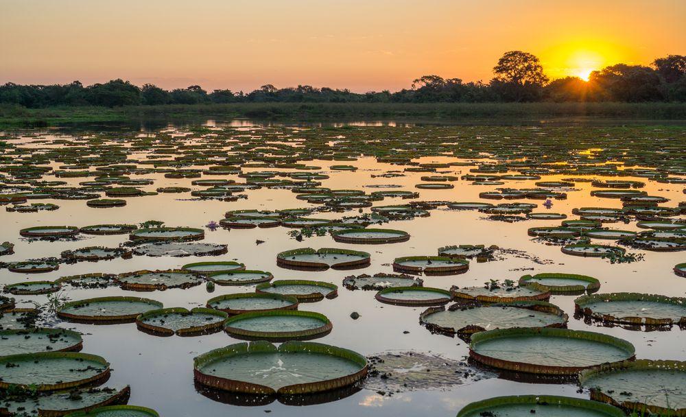 curiosidades do pantanal